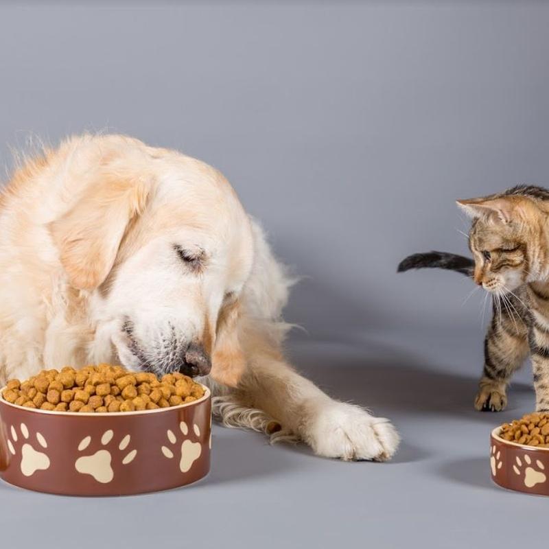Alimentación: Servicios veterinarios de Clínica Veterinaria Dobermann II