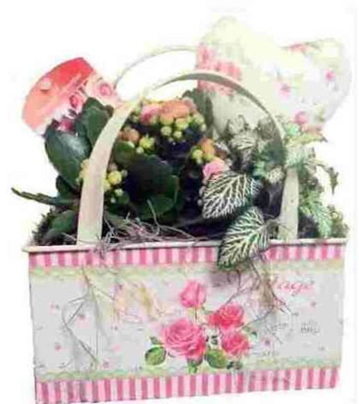 Cesta planta variada : Catálogo de Regalos de Floresdalia.com