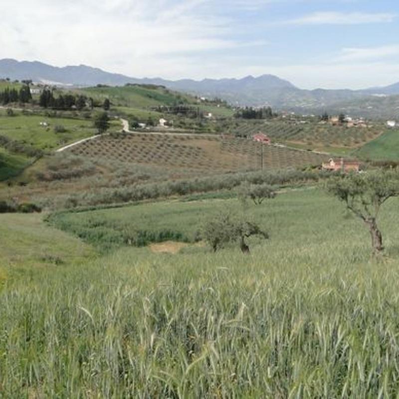 Coín – Terreno Rustico / Ref.- ID-R2639570: Inmuebles de DreaMarbella Real Estate