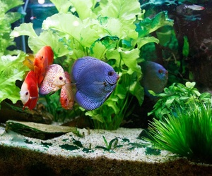 Venta de peces en Cartagena