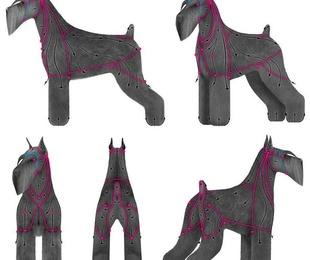 Formación Peluquería canina Comercial