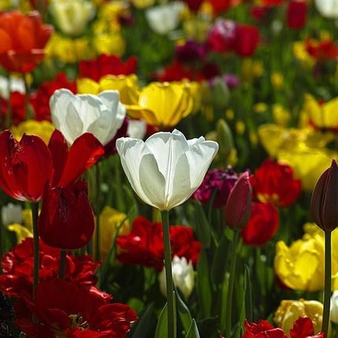 Flores en invierno: es posible