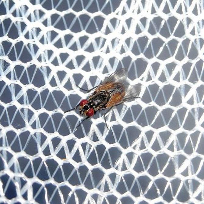 Ventajas de instalar mosquiteras