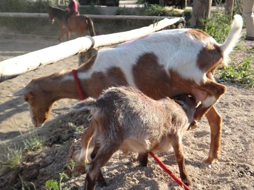 Fotos de Hípica y equitación en (Les Fonts) | Hípica Can Buimira