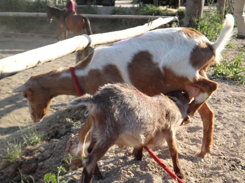Fotos de Hípica y equitación en (Les Fonts)   Hípica Can Buimira