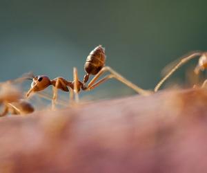 Eliminación de plagas de hormigas y otros insectos en Murcia