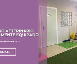 Clínica veterinaria en Boadilla | Habana Boston