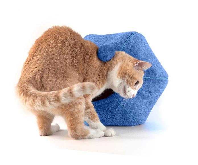 Cueva para gatos