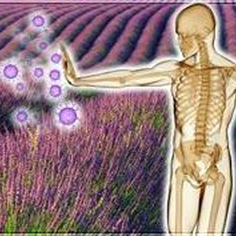 Sistema inmune: Productos de Herbolario San Bernardo122