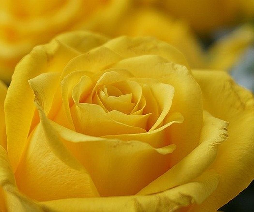 ¿Con qué flores se celebra la amistad?