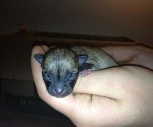 Servicios de reproducción y neonatología canina y felina