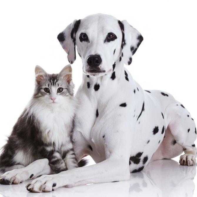 La importancia de la esterilización en perros y gatos