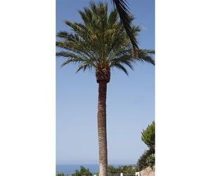Jardinería y mantenimiento de palmeras en Granada