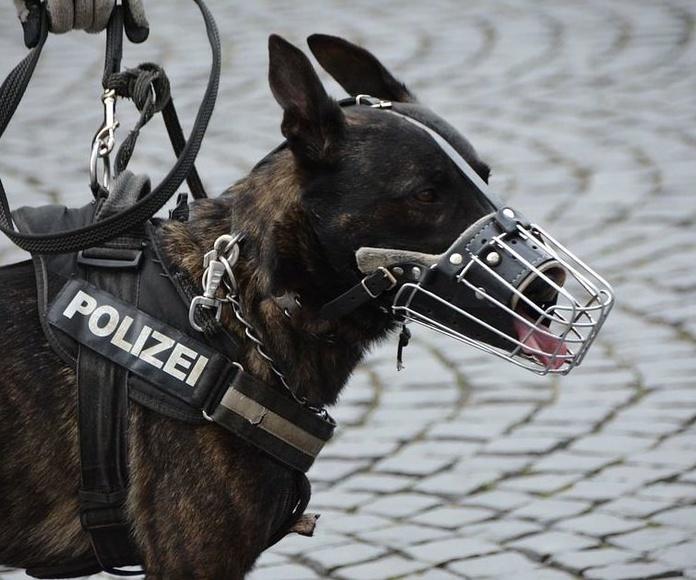 Adiestramiento canino policial