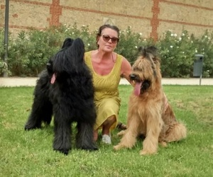 Cuidamos de los perros en Elche