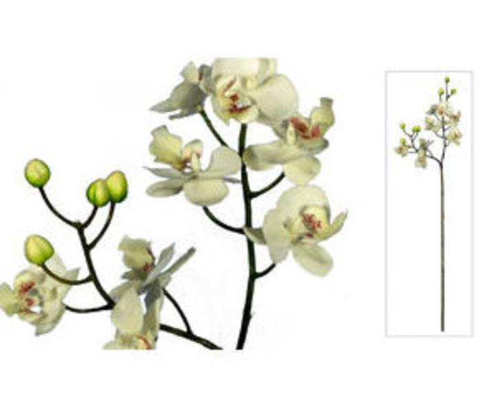 Vara Mini Orquídea