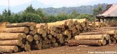 Importancia de la madera, historia y usos