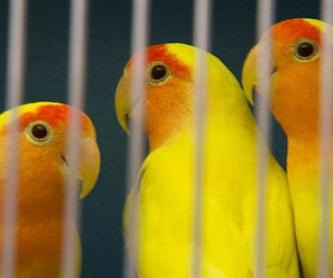 Veterinario de aves en Madrid