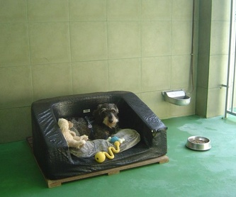 Residencia felina: Servicios de Errekagane Residencia Canina