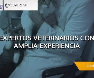 Veterinario 24 h en Barajas, Madrid |  Clínica veterinaria Plutos