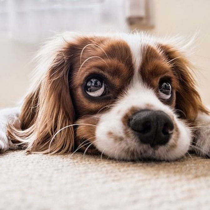¿Cómo afecta el frío al dolor articular de nuestras mascotas?