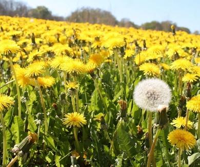 Primavera sinónimo de alergia.