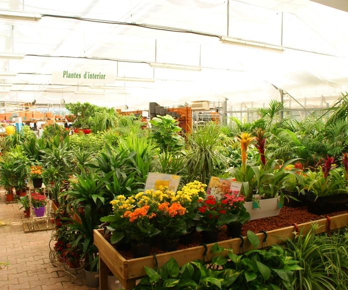 Plantas de interior y exterior: Catálogo de Mercajardí