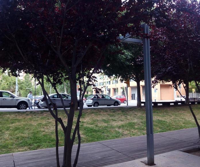 Árboles y calle desde la terraza de A la Cazuela
