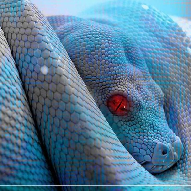 Servicio de veterinario: Catálogo de Reptil Parc