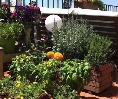 ¿Es cierto que solo se pueden regar las plantas por la tarde?