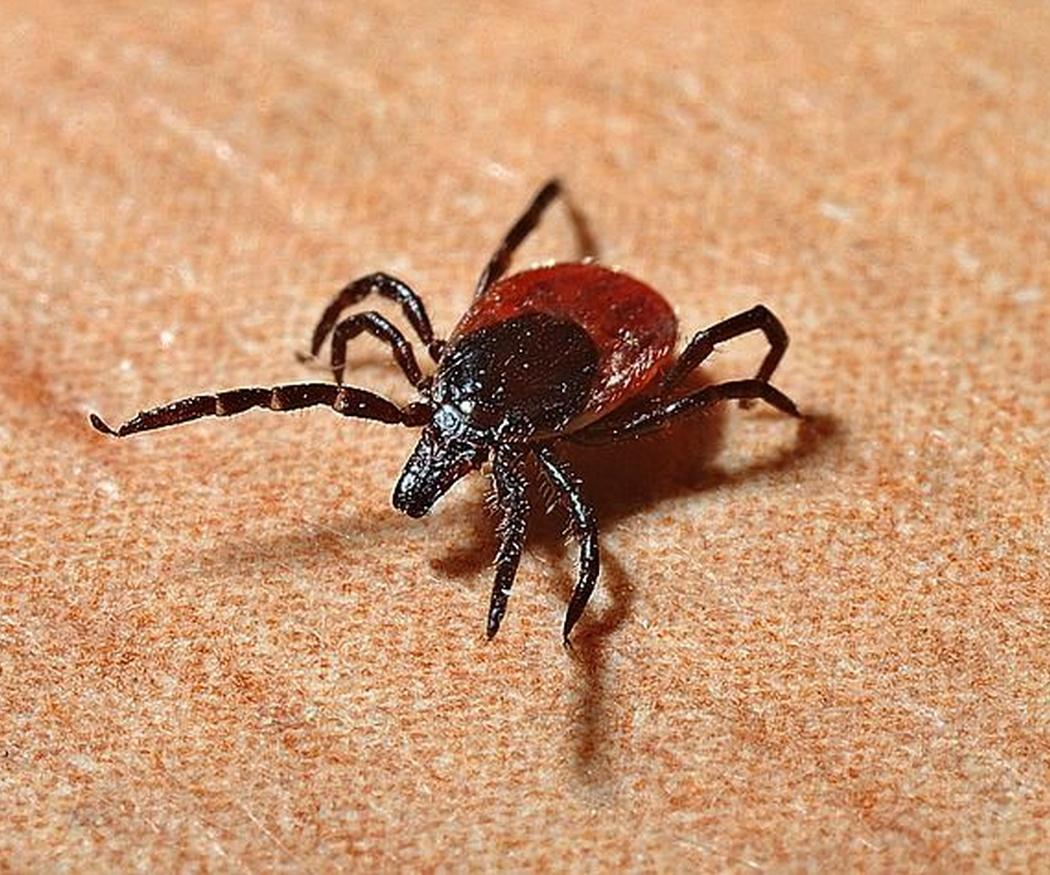 Elimina pulgas y garrapatas de tu mascota