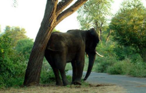 Safaris fotográficos