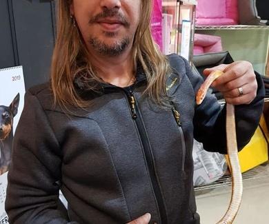 Cirugía de cuerpo extraño en serpiente, en Mascotes Castellbell