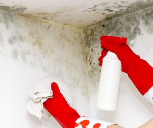 Todos los productos y servicios de Servicios de limpieza y mantenimiento en Barcelona: Eosnet