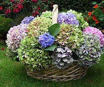 Flores Cid Arte Floral: Arreglos Florales de Flores Cid Arte Floral