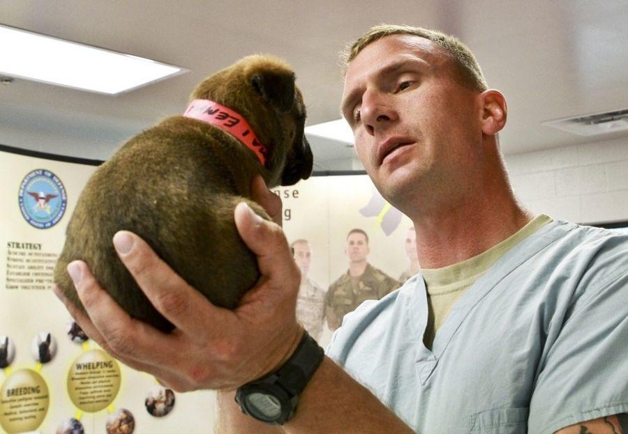 Consejos para vencer el miedo al veterinario
