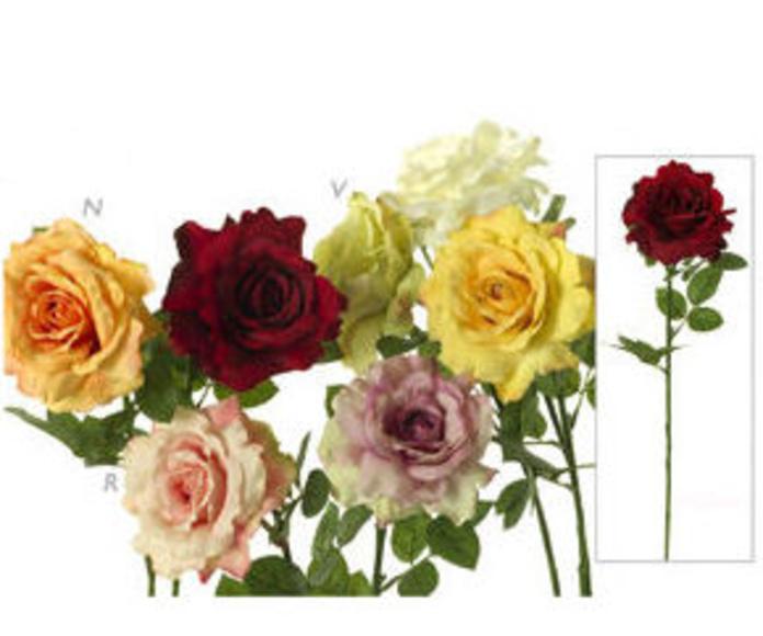 Rosa Grande WP