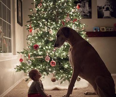 ¡Feliz Navidad Y próspero año nuevo 2020!