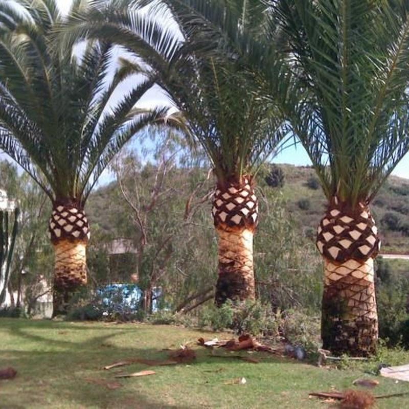 Poda de árboles y palmeras: Servicios de Indigo Jardines