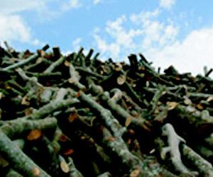 Carbones y leña en Vilanova del Vallès | Llenya Can Forns