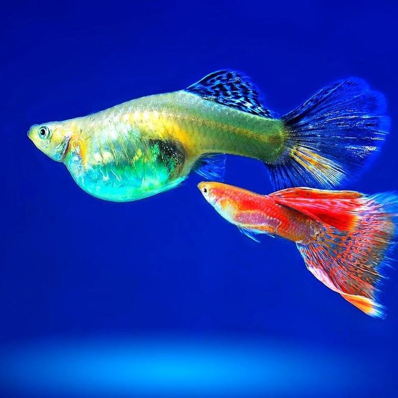 Venta de peces y acuarios: Productos y servicios de Natural Aquarium Pura Vida