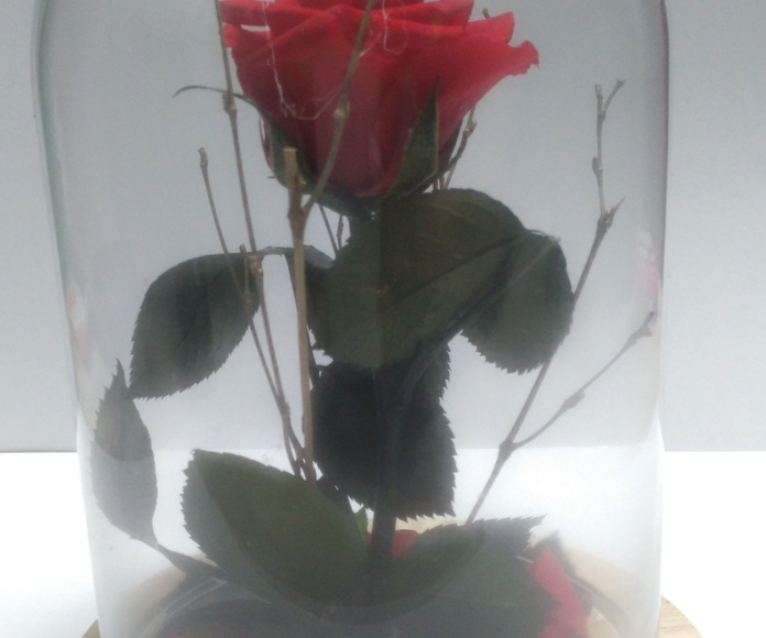 Rosa Eterna : Catálogo  de Floristería Maxiflor