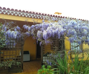 Jardinería en Tenerife