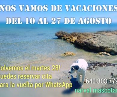 Playa para perros en España 2018 | Narval Mascotas