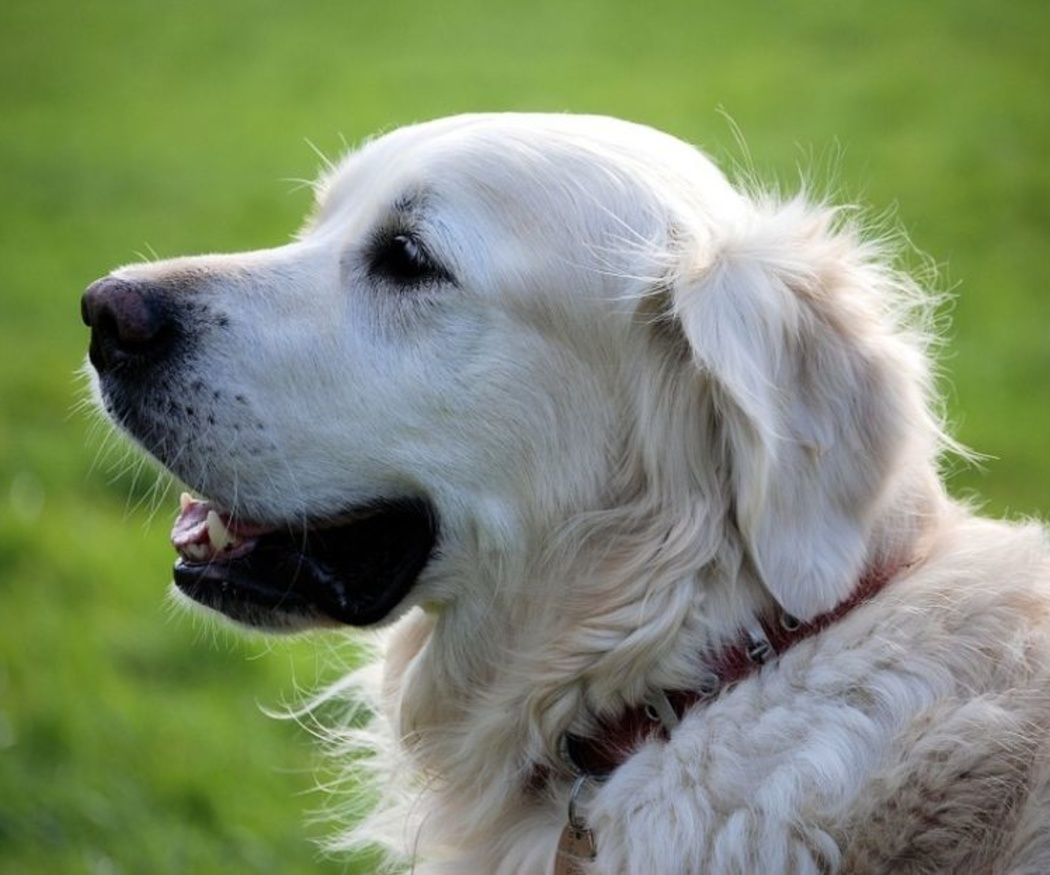 Las ventajas de la acupuntura para tu mascota