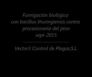 Procesionaria tratamiento biológico