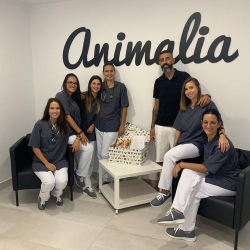 Diagnostico radiológico veterinario Tenerife sur