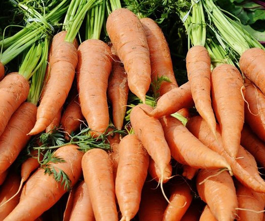 Cómo sembrar y cultivar zanahorias