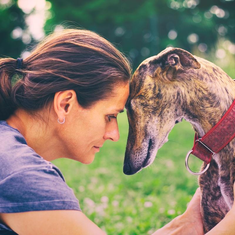 Servicios añadidos: Servicios de Beauty Dog Spa