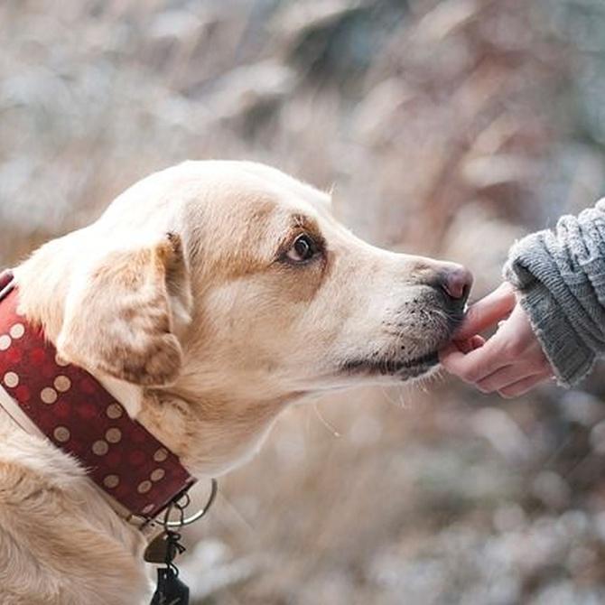 ¿Cómo mantener una buena higiene dental en tu perro?